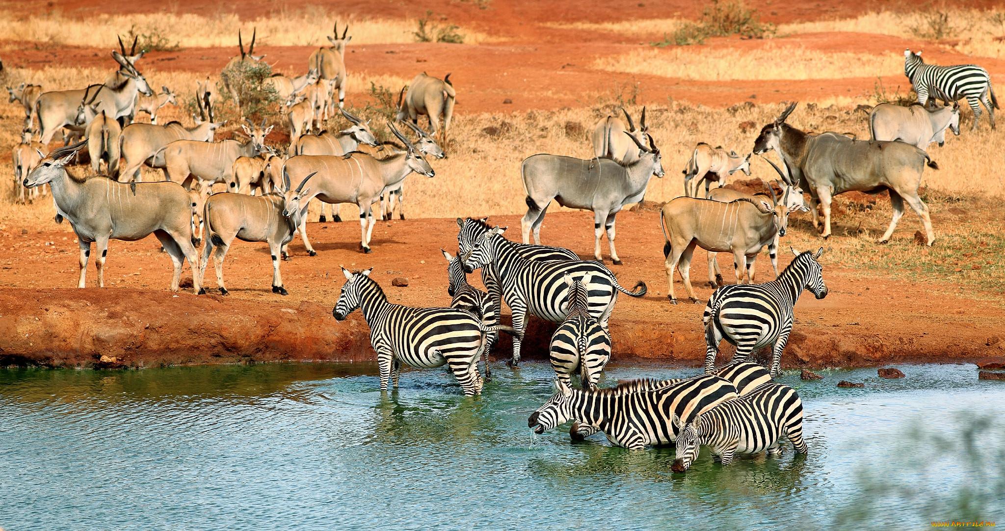 Животные разных миров картинки